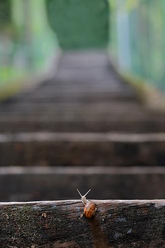 snail climbing stairs